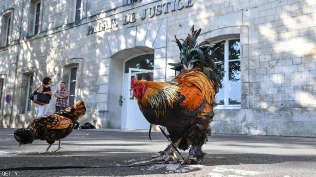 نفوق الديك مويس رمز الحياة الريفية في فرنسا